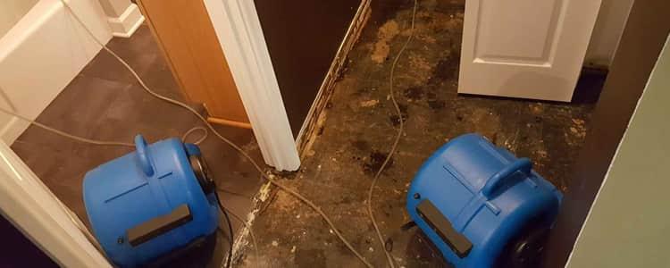 Best Flood Damage Restoration Gosnells